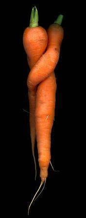 Carrot Lovers