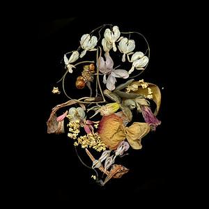 Samsara: Dried Petals at the End of Summer